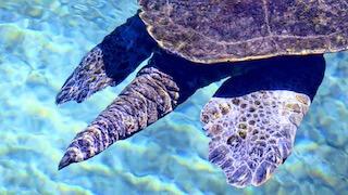 Sea Turtle, Steven Reid, 2019
